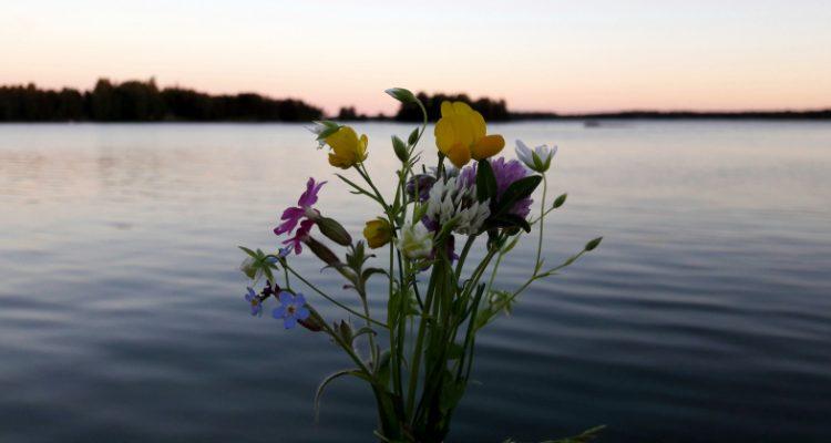 Juhannustaika kukat. Midsummer magic flowers