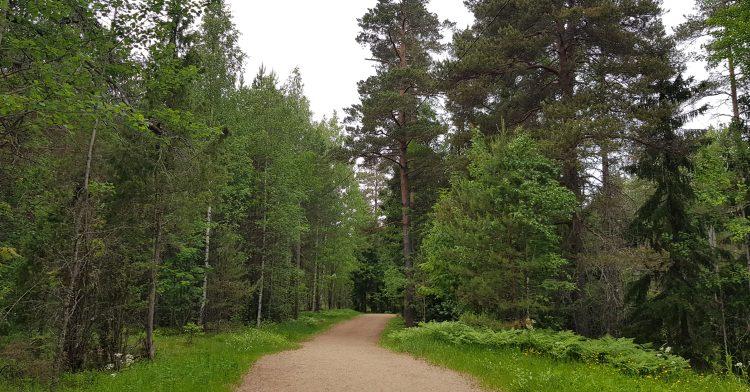 Paloheinä Haltiala nature trail. Paloheinän Haltialan luontopolku