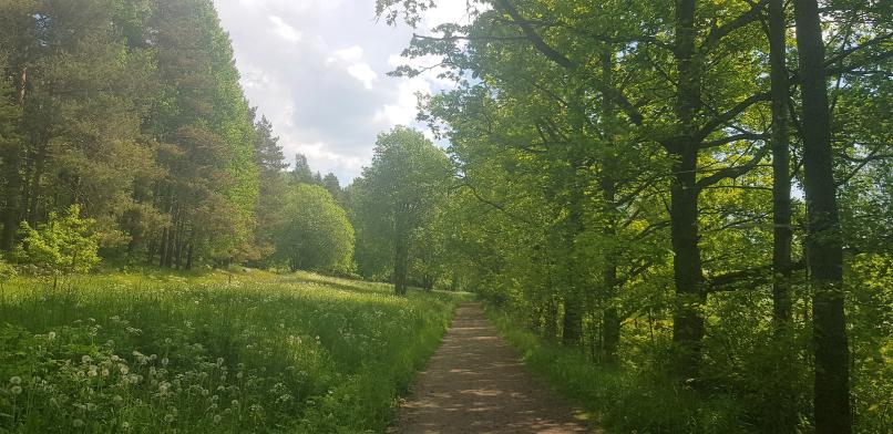 Leafy trails of Talosaari Husö in Östersundom, Helsinki.