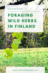 Wild herbs in Finland