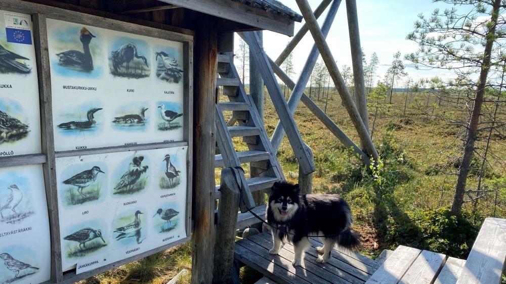 Birdwatching tower