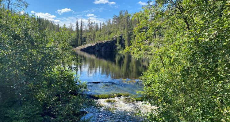 Pyhäjoki nature trail in Pallas