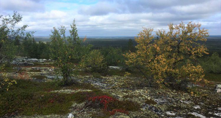 Wilderness areas in Finland